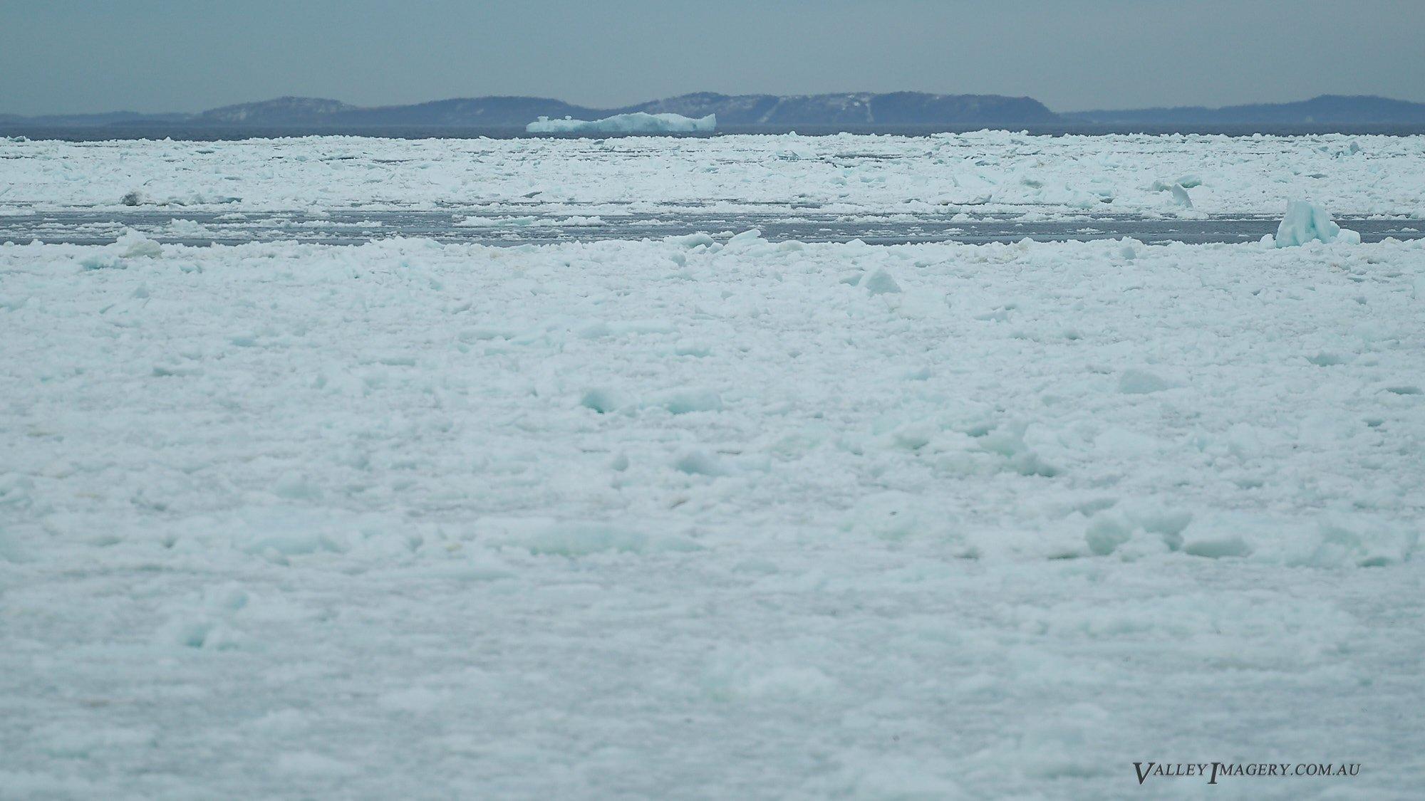 Pack Ice near Fogo