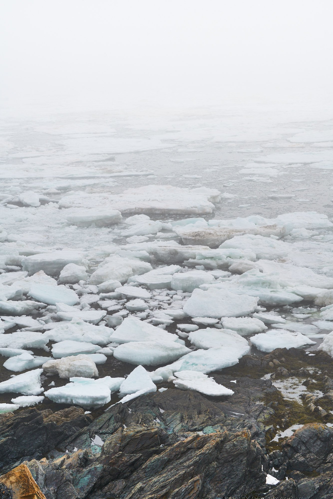 Pack Ice Ocean Newfoundland